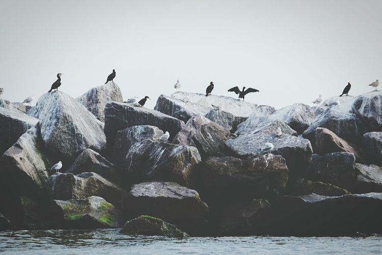 Cormorants And Seagulls Perching On Rocks By Sea Against Sky