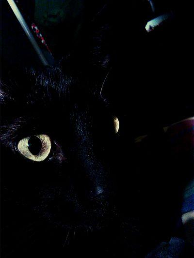 Titecio I Amomigato Blackcatlove Gatnegre BLackCat
