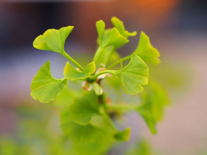 Close-up of green leaves against blurred background