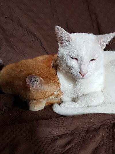 Brothers Animal Themes Pets Animal One Animal Domestic Mammal Domestic Animals Cat Vertebrate Domestic Cat Feline Relaxation Indoors  Furniture No People Resting High Angle View Close-up Lying Down Bed