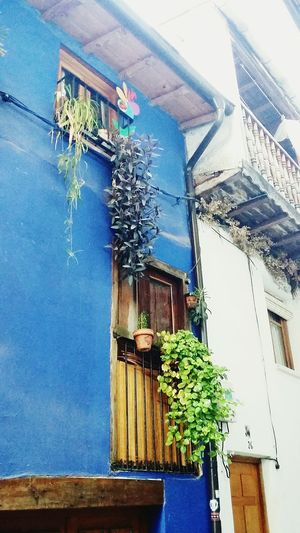 House plant Architecture Built Structure Building Exterior Window Residential Building Outdoors Flowers