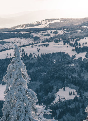 Beauty In Nature Cold Temperature Day Environment High Angle View Landscape Mountain Nature No People Non-urban Scene Outdoors Plant Scenics - Nature Sky Snow Tranquil Scene Tranquility Tree Winter