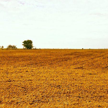 Autumn Filtr Field Today ground