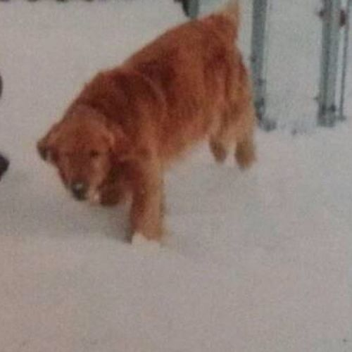 TakeItBackTuesday this dog was my best friend. I miss him all the time. Bffs since day one.