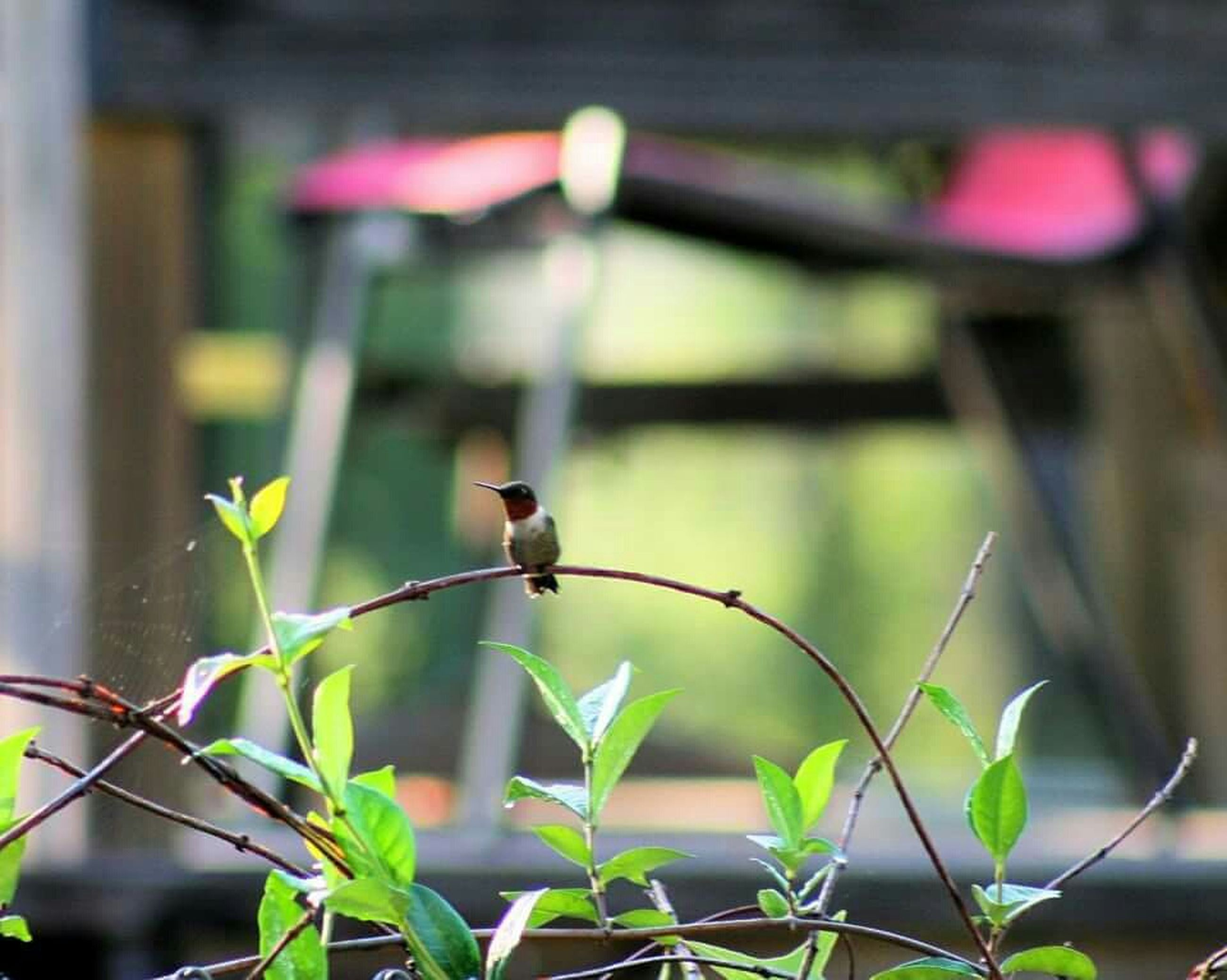 focus on foreground, plant, flower, close-up, growth, leaf, nature, bird, selective focus, perching, stem, animal themes, one animal, fragility, beauty in nature, day, outdoors, animals in the wild, wildlife, fence