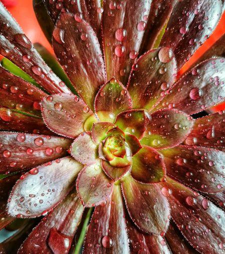Full frame shot of wet flower