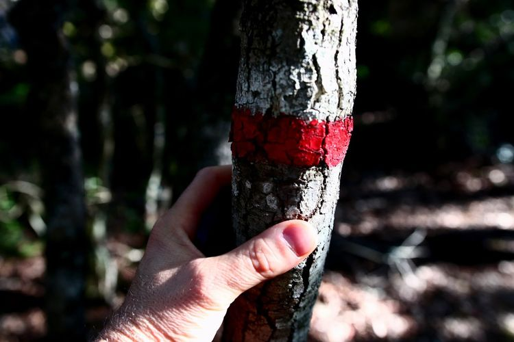Midsection of person holding tree trunk in forest