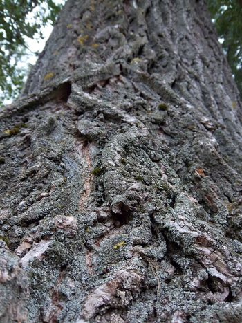 Close-up Detail Grey Nature Nature Photography Populus Tree Treelovers
