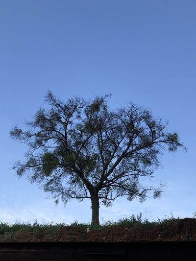 Alone tree 🌳
