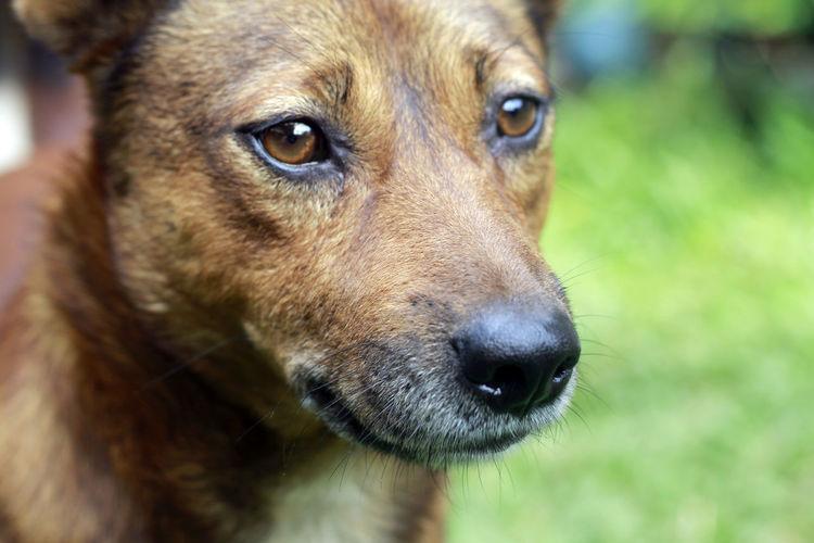 Anjing Kampung Anjing Lokal Dog For Food Dog Staring At Camera Doggy EyeEm Best Shots Hungry Dog Ingonesian Do