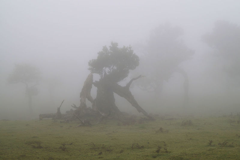 Damaged tree on field during foggy weather