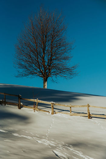 Winter lanscape with tree and fence Bare Tree Beauty In Nature Blue Branch Clear Sky Cold Temperature Landscape Nature No People Outdoors Scenics Sky Snow Tranquility Tree Winter
