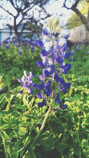 Hanging Out Taking Photos Check This Out Hello World Cheese! Relaxing Enjoying Life Hi! Colors Simplicity Bluebonnets Spring Flowers Wildflowers Texas The Great Outdoors - 2016 EyeEm Awards Found On The Roll The Great Outdoors - 2018 EyeEm Awards