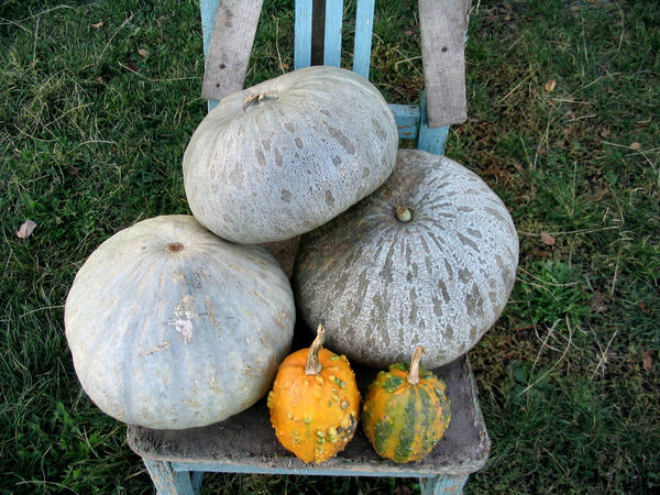 Pumpkin chair Chair Market Transylvania Autumn Day Food Food And Drink Healthy Eating No People Outdoors Pumpkin Squash - Vegetable Vegetable