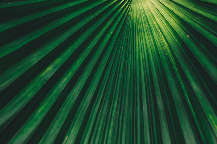Full frame shot of palm leaves