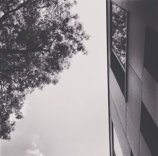 h e r f a v o r i t e c o l o r Windowshotwednesday Noartificialtrees Fortheloveofblackandwhite