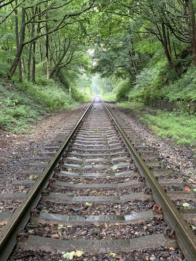 View of railroad tracks in forest