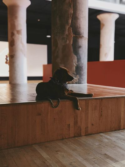 Dog sitting on wooden floor