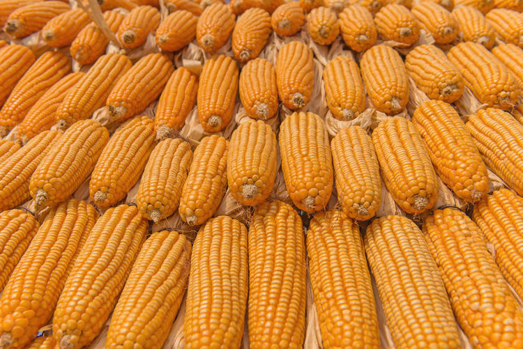 Corn Food Food And Drink Vegetable Backgrounds Full Frame Freshness Yellow Sweetcorn Healthy Eating Large Group Of Objects Wellbeing No People Corn On The Cob Agriculture Abundance Market In A Row Raw Food Corn - Crop Ripe