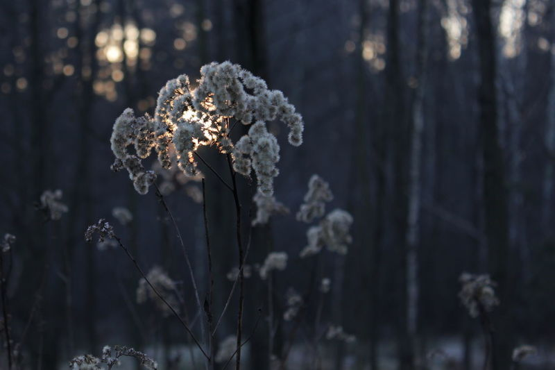 Beauty In Nature Close-up Cold Weather Day Forest Fragility Freshness Growth Moody Moody Weather Nature No People Outdoors Sunset Sunset_collection Tranquility Winter Winter Tones
