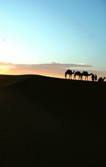 camels Bicycle Sunset Silhouette Cycling Bird Sky Tranquil Scene Countryside Arid Landscape Scenics Calm Non-urban Scene Tranquility Mountain Range EyeEmNewHere