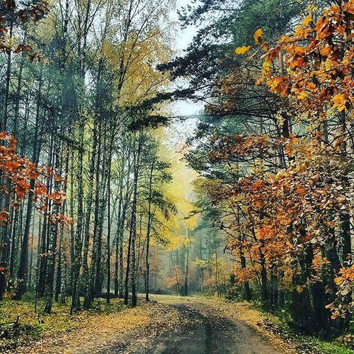 Beautiful Jesień Instagram Nature Poland Instanature Canon Trees Autumn Wonderful Instaphoto Fall Avenue Maple Piekna Zlota Spacerek 🎈👻 Miastomoje Forest Myworld Swag
