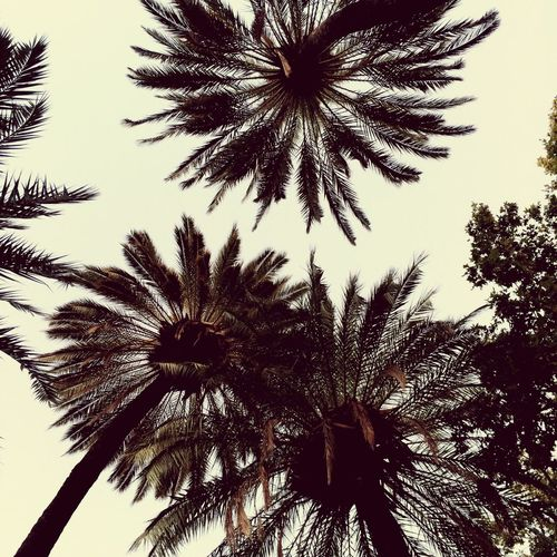 Low Angle View Tree Plant Sky Growth Nature No People Outdoors Clear Sky Palm Tree