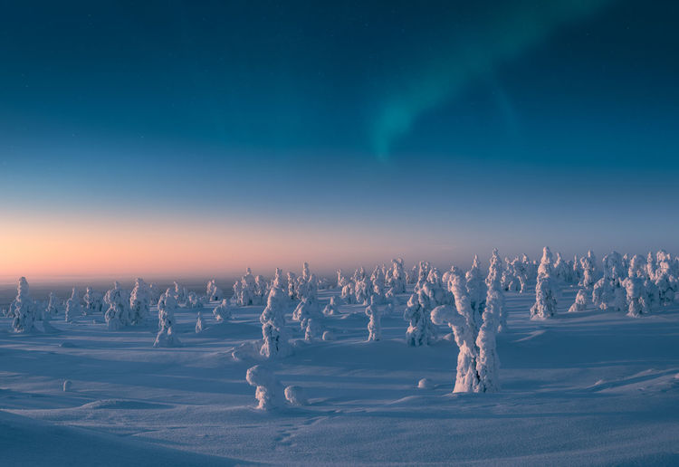 Snow covered trees in the morning light with aurora borealis on the sky