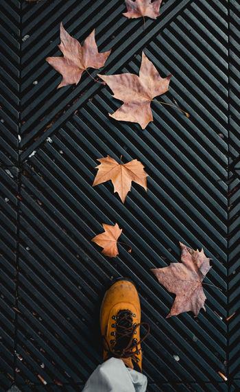 Pattern Leaf One Person Leaves Day Maple Leaf Brown Orange Color Shoe