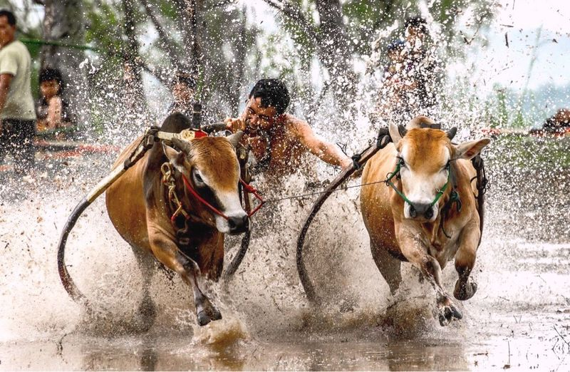 Full length of man riding horses in water