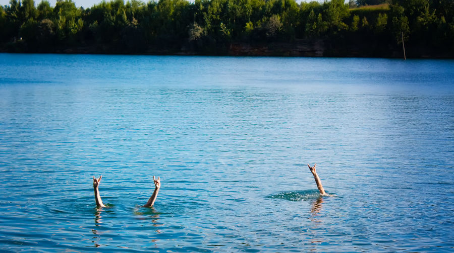 Swimming Animal Themes Animal Wildlife Animals In The Wild Background Beauty In Nature Bird Day Flamingo Lake Lake View Lifestyles Nature No People Outdoors Scenics Sky Summer Swan Sweet Swim Swimming Tree Water