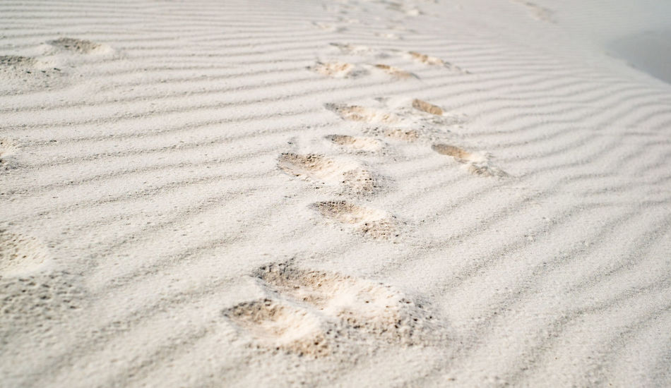 Dog paw prints in the sand Dog Paw Paw Print Paw Prints In The Sand Traces Of Time Backgrounds Beach Beauty Close-up Day Nature No People Outdoors Pattern Sand Sand Dune Tire Track Traces In The Sand