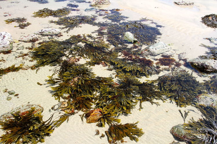 Beauty In Nature Close-up Day Growth High Angle View Low Tide Marine Biology Marine Life Nature No People Outdoors Plant Sea Weed  Tide Pool Tidepools Wrack