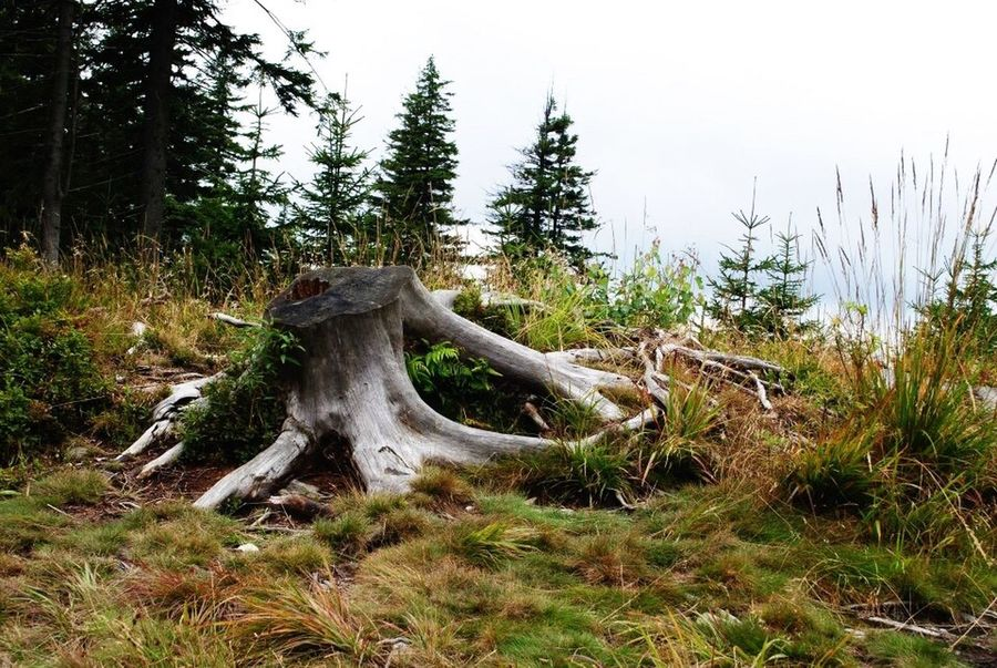 Meadow Nature Colour Of Life Late Summer Colours Hiking Trunk We Die Eventually