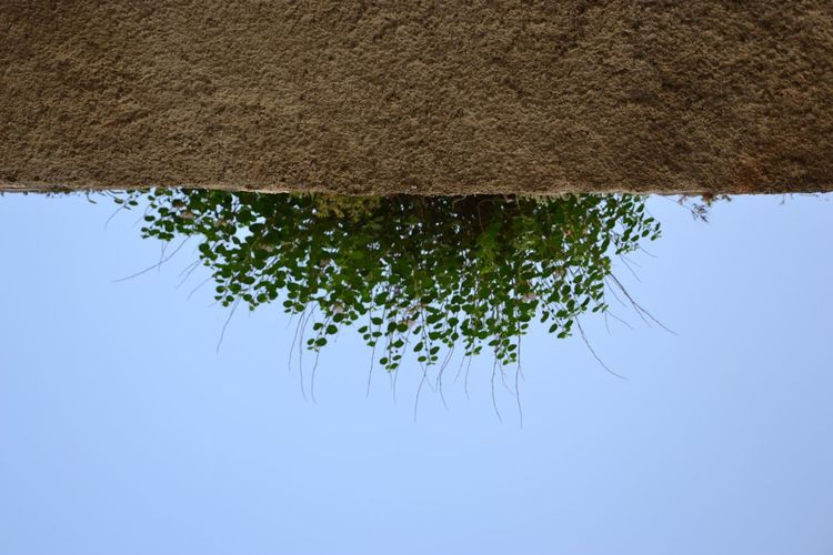 Plant Sky Nature Growth Tree Day No People Outdoors Clear Sky Plant Part Copy Space Green Color Wall - Building Feature Low Angle View Branch Tranquility Reflection Lake Water