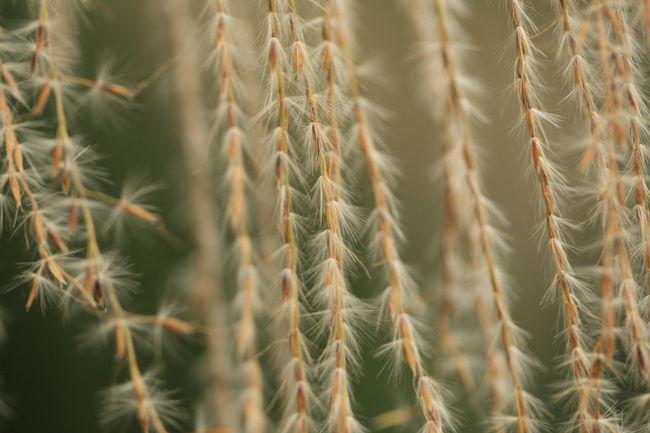 すすき ススキの穂 Autumn Autumun Color Grass Nature Nature Photography Autumn🍁🍁🍁 Autumun Photography