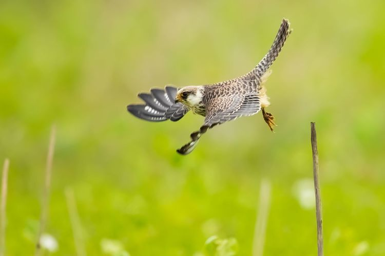 Bird flying over a blurred background