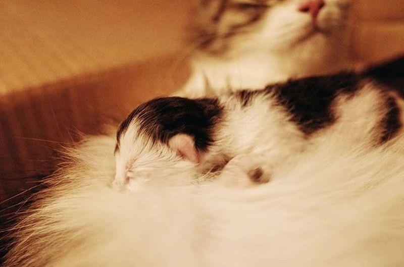 奶牛. Cat Catbaby