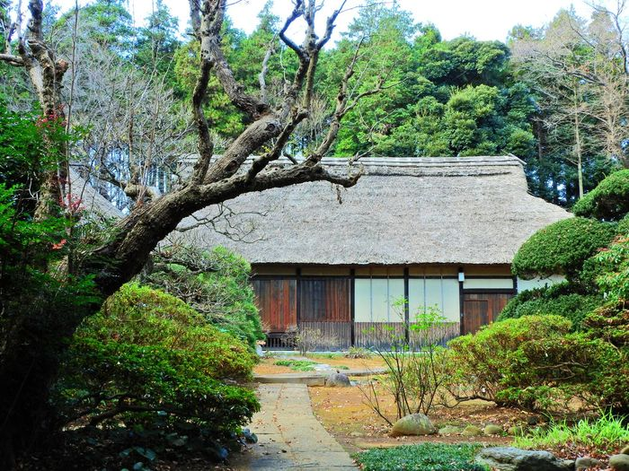 Architecture Branch Building Exterior Built Structure Day Early In The Seventeenth Century Green Color Growth House National Important Cultural Properties Nature No People Outdoors Residential Building Sky Tree