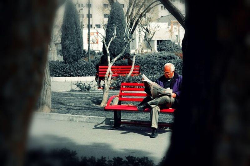 Study مطالعه Studying Bench Nikon D3100 Old Man