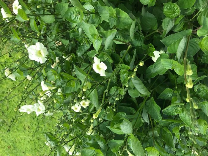 Green Color Leaf Growth Nature Flower Plant Beauty In Nature Outdoors No People Day Freshness Fragility Close-up Flower Head