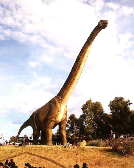 Dinosaurio 😃😃 Cuello Largo jaja