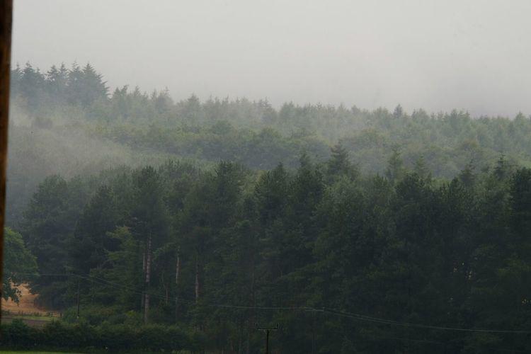 Detchant Woods Detchant Northumberland Hug A Tree Landscape