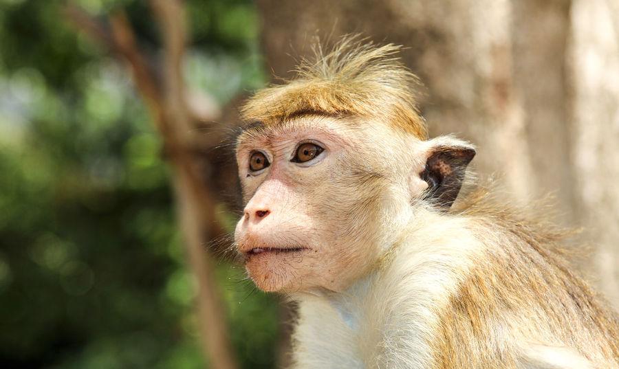 Animal Portrait Animals Bird Birds Earth Forrest Pig Go Monkey Mountain Outdoors Sun Wildlife Wildlife & Nature