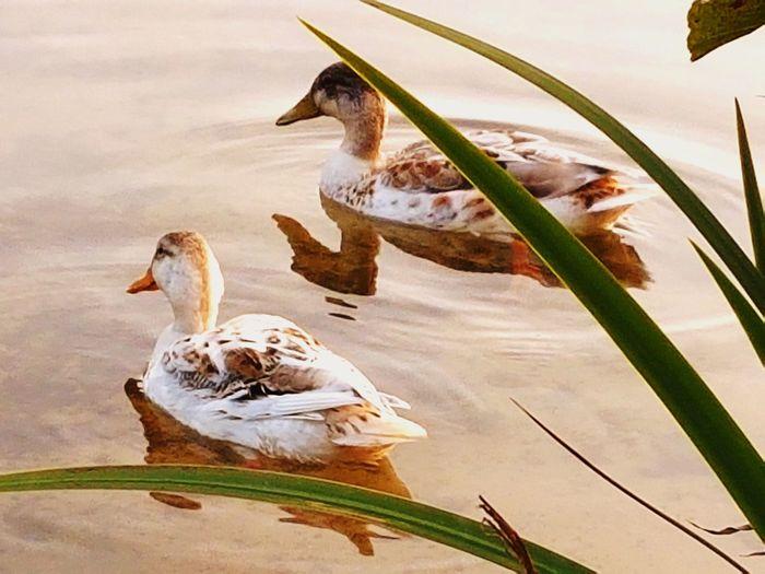 Bird Young