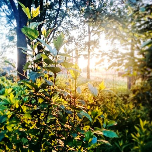 Colourful Focus On Foreground Freshness Green Color Growth Macro Plants Nature Nature Photography Sunlight Sunny Day Sunshine