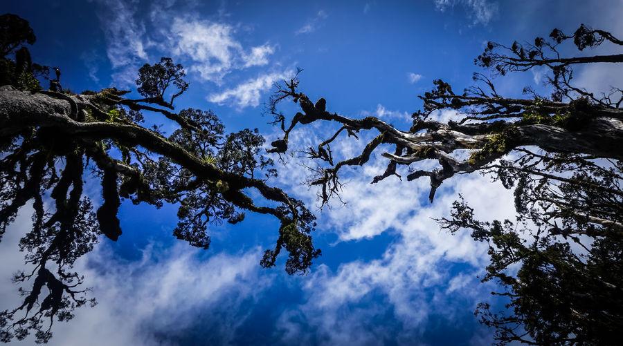 Cloud Cloud -