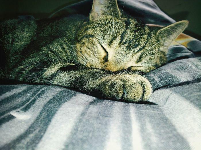 Cute cat sleeping in bed