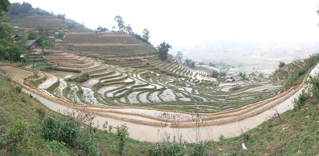 Rice Sapa Agriculture Ancient Civilization Beauty In Nature Day Environment Field Green Color Growth Land Landscape Nature No People Outdoors Plant Rice Paddy Rural Scene Sa Pa Vietnam Scenics - Nature Terrace Terraced Field Tranquil Scene Tranquility Tree
