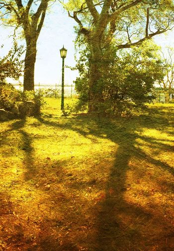 Light by the Sea Lamppost Fence Rye_ny Trees DistressedFX Rye_playland Shadows & Lights Autumn
